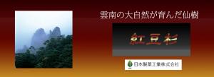 雲南の大自然が育んだ仙樹「紅豆杉」
